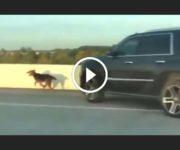 Chien sauvé sur l'autoroute
