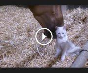 chat et cheval copains
