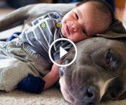 bébés pitbulls enfants
