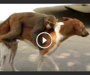 chien et singe macaque