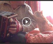 chat accordéon