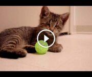 chaton aveugle