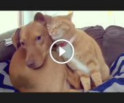 amitié chien chat
