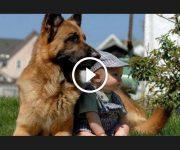 chiens protègent bébés