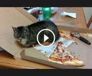 la logique des chats