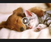 chiens et chats meilleurs amis