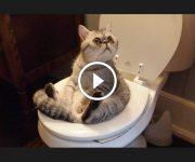 chats rigolos comiques