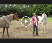 musique pour animaux