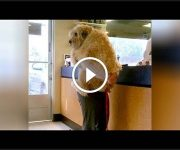 animaux vétérinaires