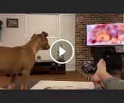 chien réaction roi lion mufasa
