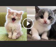 chatons rigolos compilation