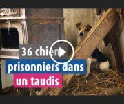 36 chiens sauvés dans un taudis