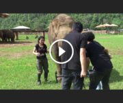 sanctuaire elephants