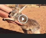 sauvatge bébés animaux