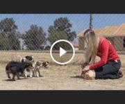 abandon chiens désert