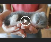 chatons orphelins