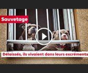 sauvetage chiens 30 millions d'amis