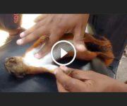 écureuil électrocuté