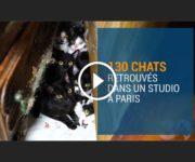 chats studio