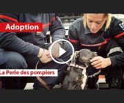 chien adopté pompiers