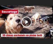 chiens de chasse maltraités