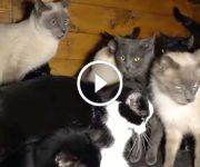 chats enfermés