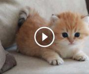 chaton dangereux