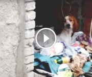 chiens chats maltraités