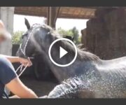 sauvetage chevaux poneys