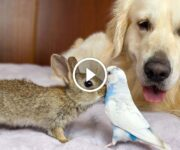 lapin perruche golden retriever