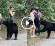 ours noir rencontre