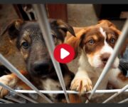 usines à chiens