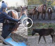 chevaux sauvetage spa